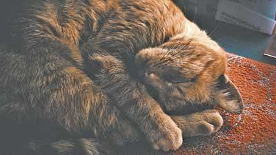 __CatSleepingCurledStockArt