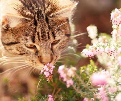 CatSniffsFlowerJan2020